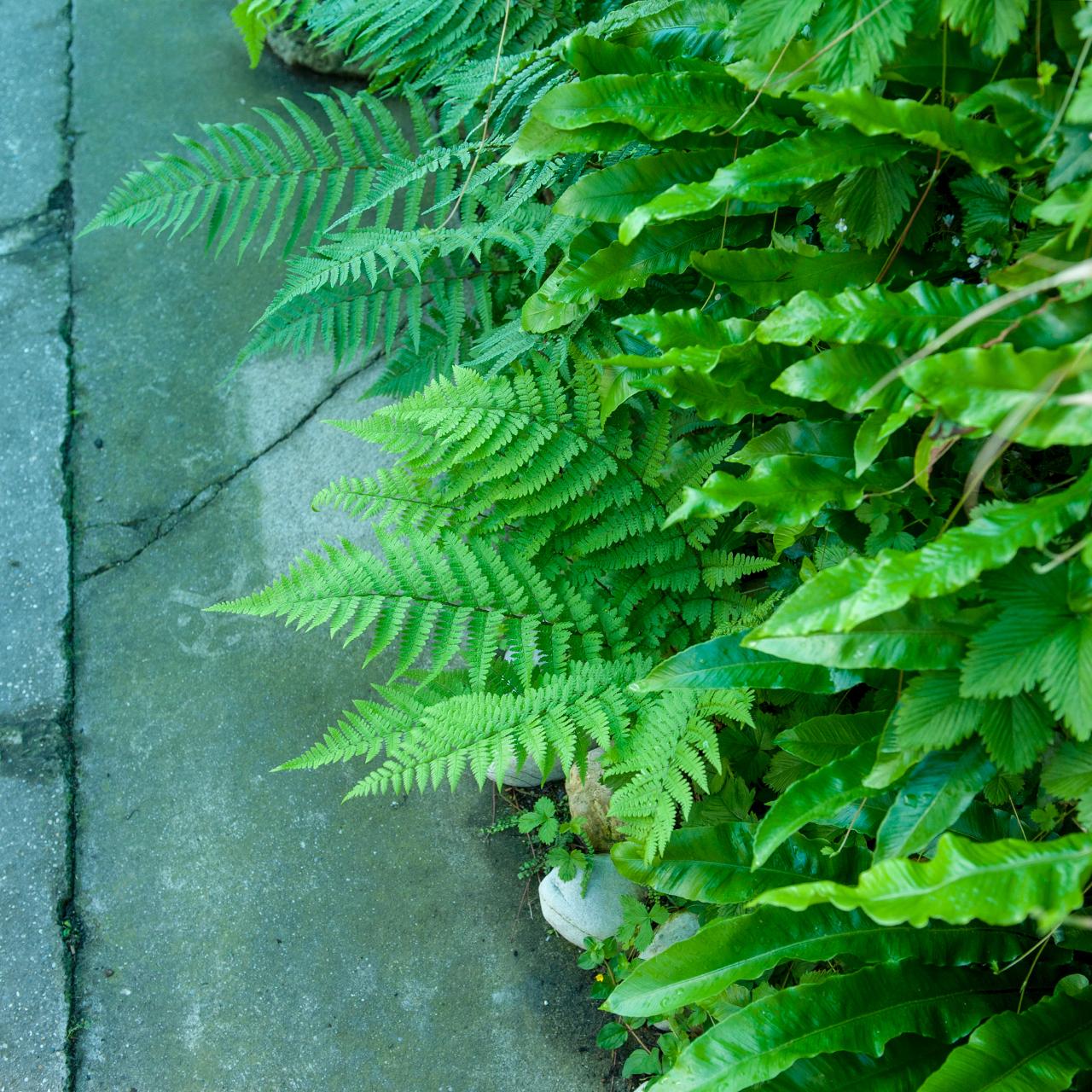 Greenwall Vertikaler Garten Wandbegrünung Vertical Garden at Farnwerk