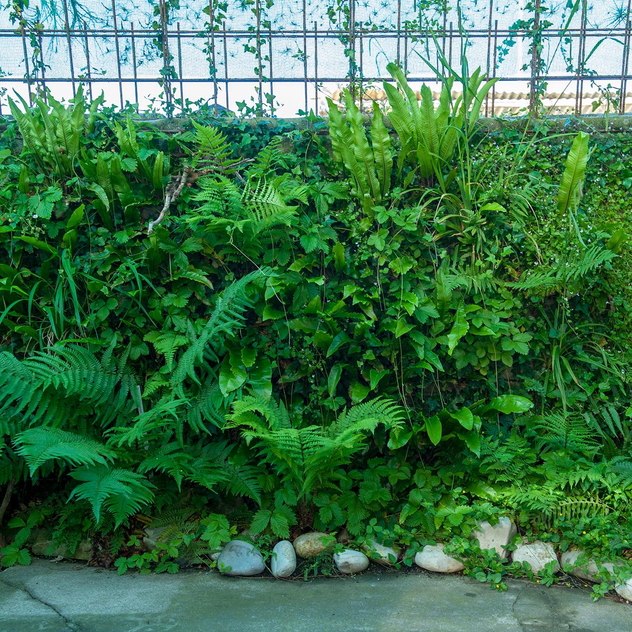 Vertical Garden at Farnwerk