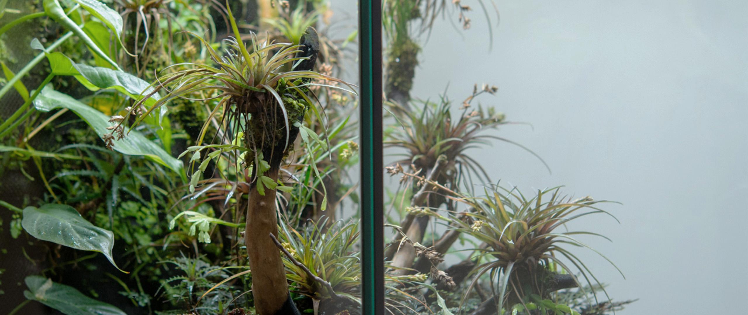 dark_banner_rainforest_terrarium11