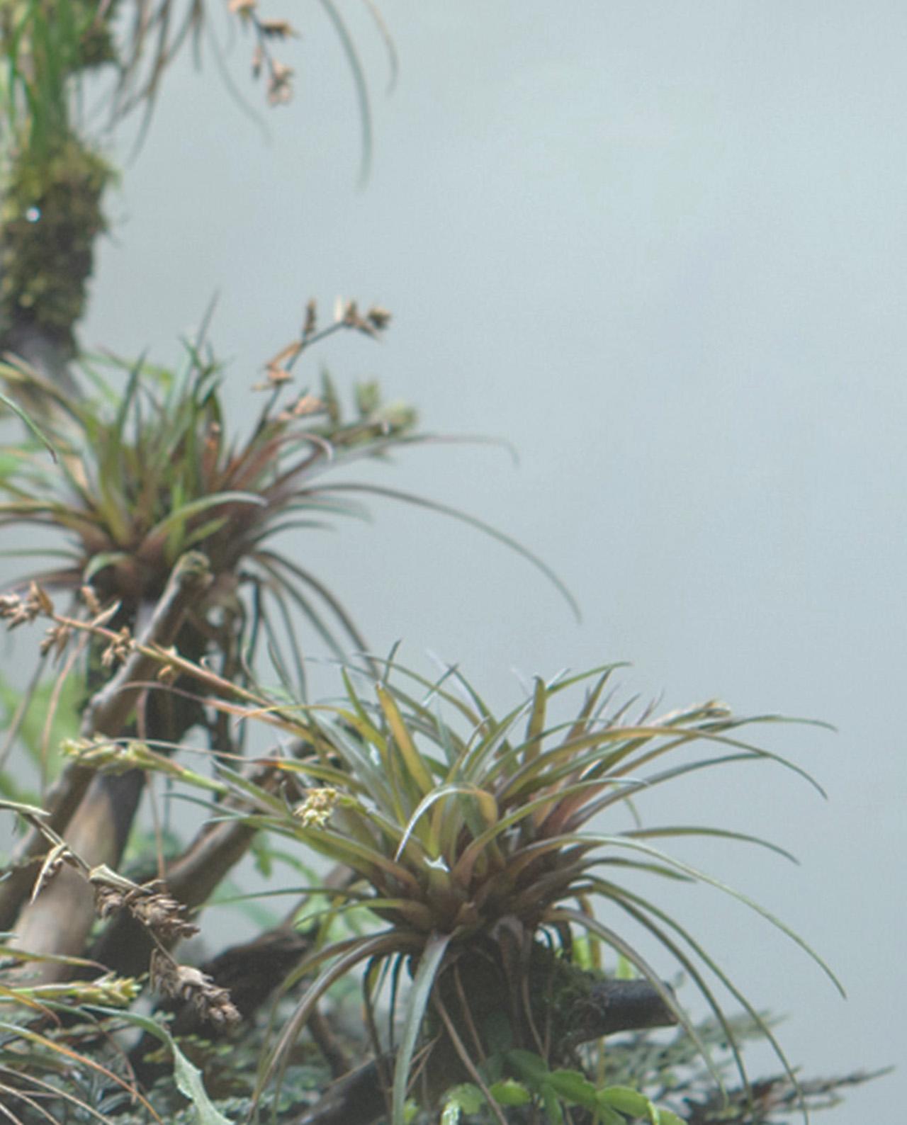dark_banner_rainforest_terrarium11_mobile