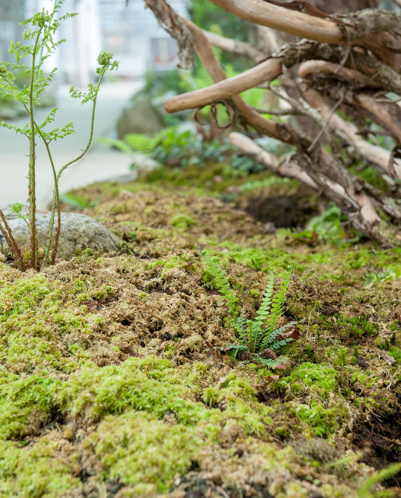 Naturgarten Moorbeet Und Teich Farnwerk Gartnerei Farne Online