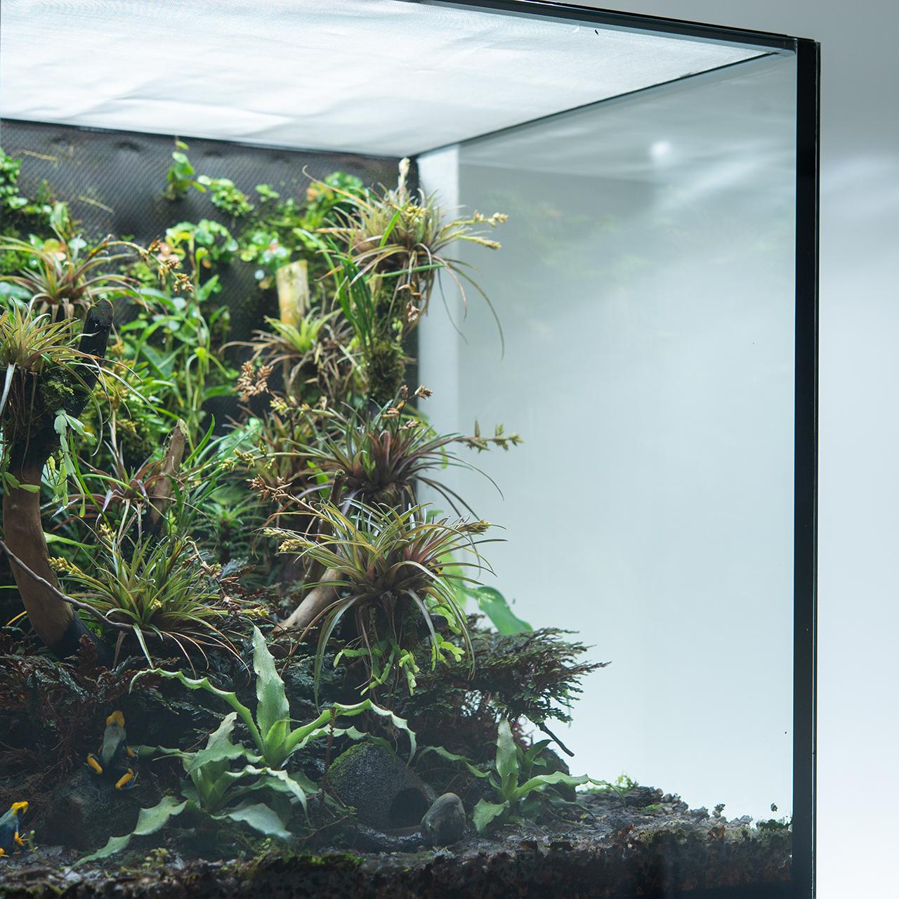 terrarium15