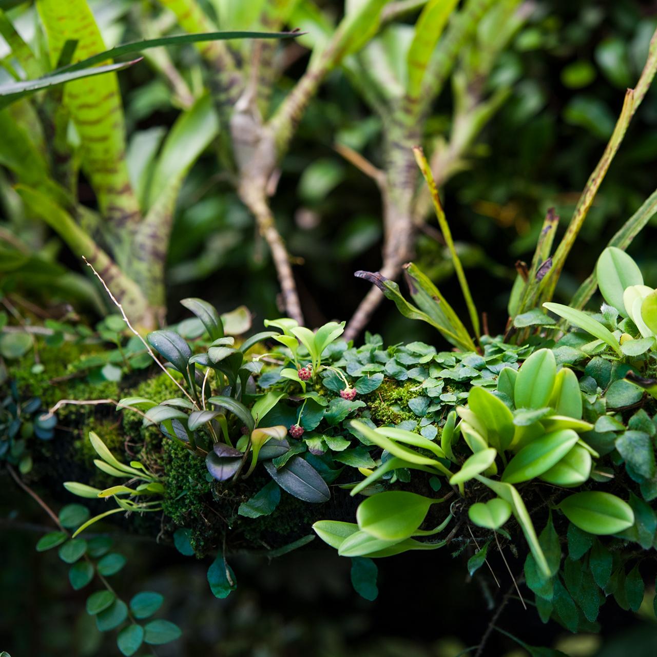Hygrolon Terrarium Farnwerk Epiphytenast Dendrobaten Pfeilgiftfrösche Gecko